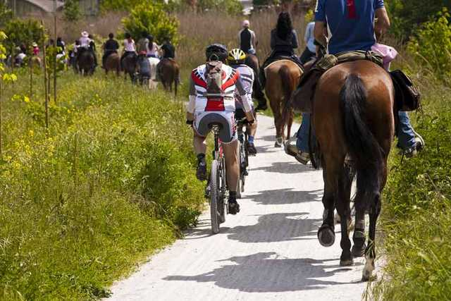 Activities and Sport in Romagna