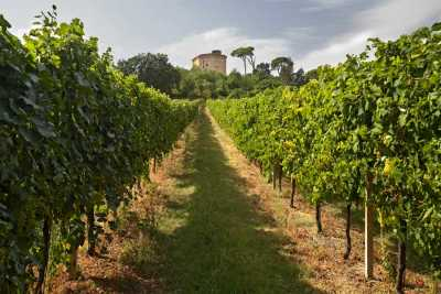Romagna with its good wine of